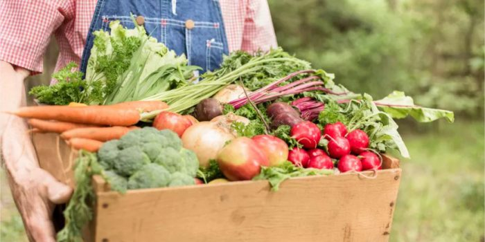 Comment L'agriculture Biologique Profite à L'environnement ?